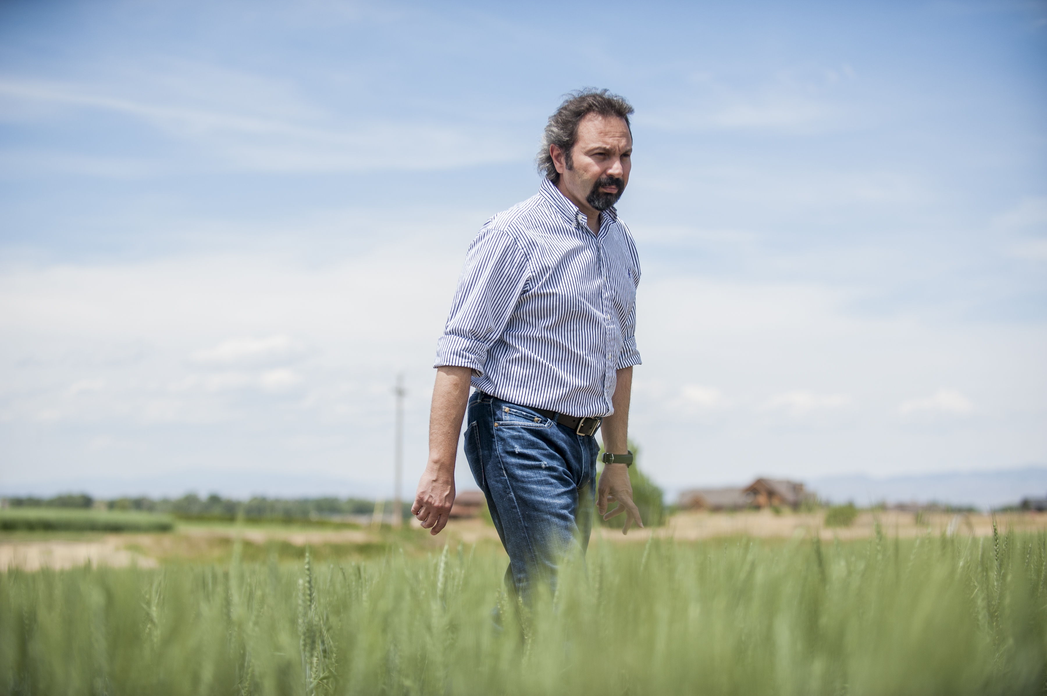 Dr. Hikmet Budak walking in a wheat field